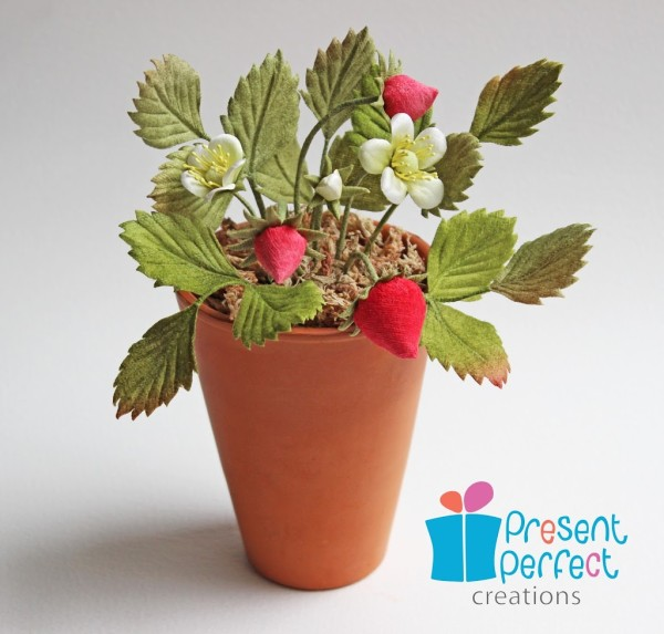 A strawberry plant
