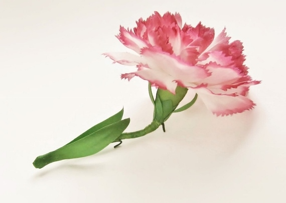 pink_carnation_left_side ff (570x485)