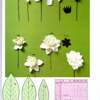 gardenia var2-2 (353x500)