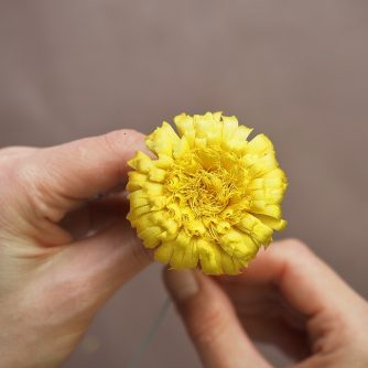 silk dandelion flower