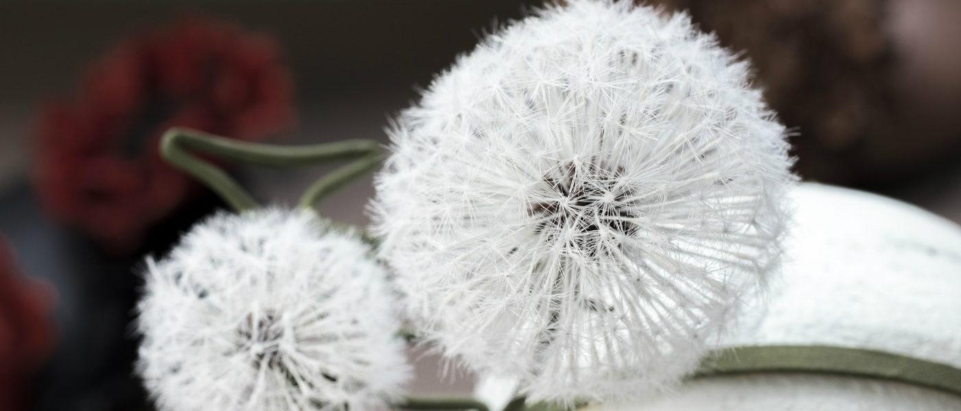 silk dandelion clock