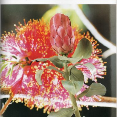 Fabric flower making books: Australian flowers