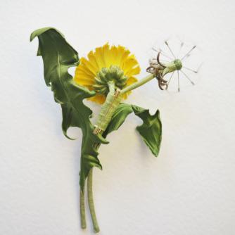 silk dandelion flower and dandelion corsage