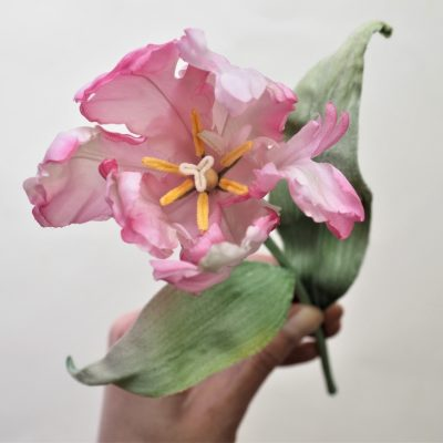 Silk Parrot tulip with leaves