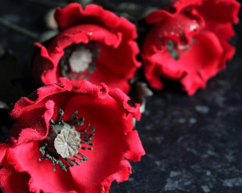 wild velvet poppies